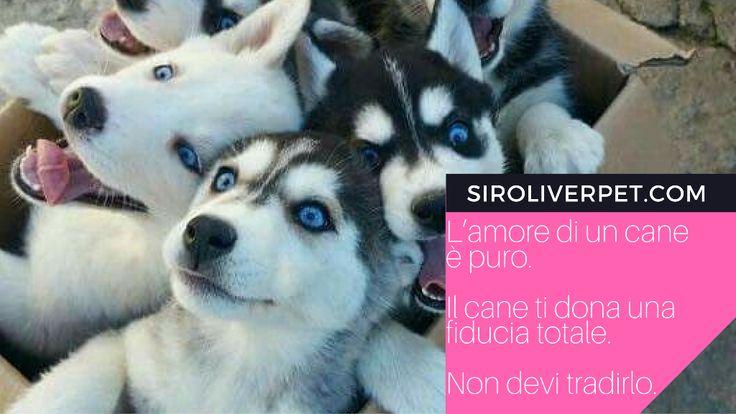 L'amore di un cane è puro. Il cane ti dona una fiducia totale. Non devi tradirlo.' (Michel Houellebecq)