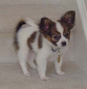 my puppy looked like this when he was a pupppppp<3 awwww