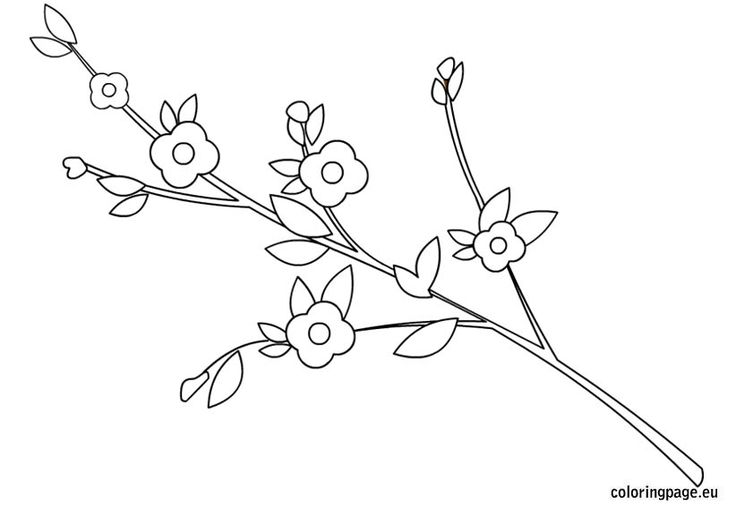 branch-with-flowers