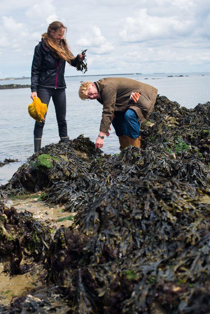 Lisette harvesting seaweed with her dad! #dutchweedburger #thedutchweedburger #vegan #veganhamburger #veganburger #seaweed #weed #plantpower #lisettekreischer
