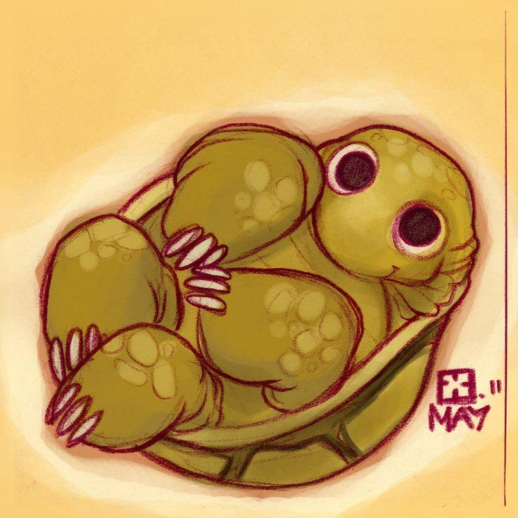 tortoise drawing for pinterest - photo #9