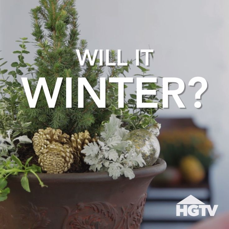 Fall to Winter Planter