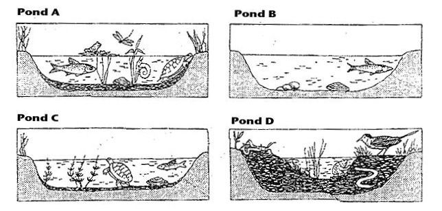 Ecosystem Worksheet Middle School: pond succession printable  free   Tools for Teaching Middle School    ,