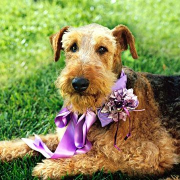 An easy way to include your favorite pooch on your big day.