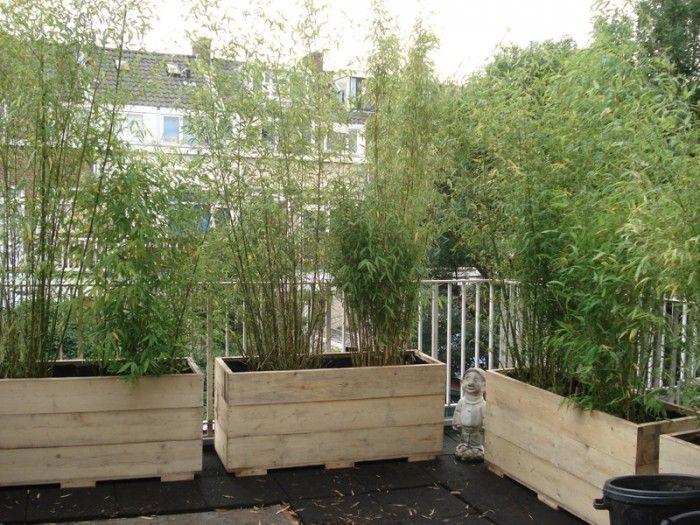 321 beste afbeeldingen over out door op pinterest tuinen decks en vuurkorven - Bamboe in bakken terras ...