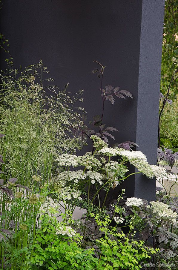 Hampton Court Flower Show 2012 - Falling leaves. Designed by Elizabeth Seymour. Photo by Cecilia Soneskär Love the black and white theme.