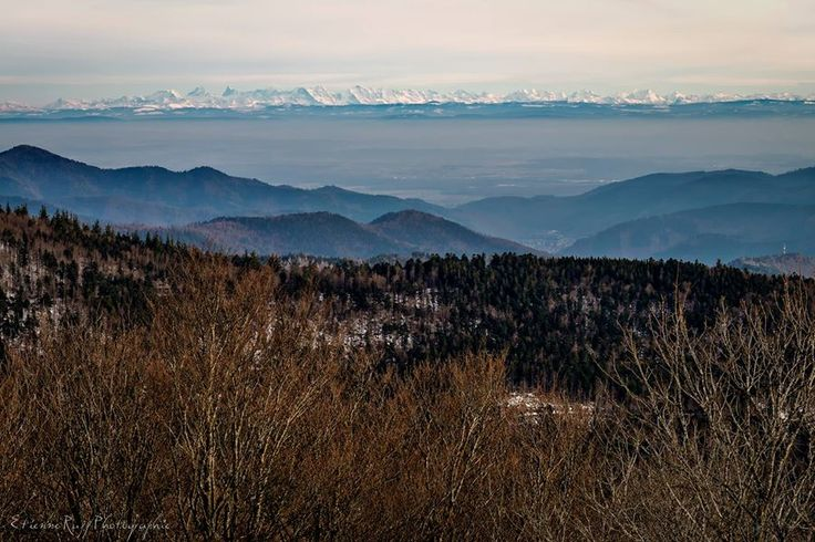 vue sur les alpes depuis le Ballon d'Alsace