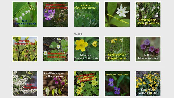 Kasvit mahdollistavat nykyisen kaltaisen elämän maapallolla tuottamalla fotosynteesissa happea. Ne ovat monesti myös koko ravintoketjun perusta. Sienet ovat tärkeitä hajoittajia, joista monet muut kasvit ovat riippuvaisia.