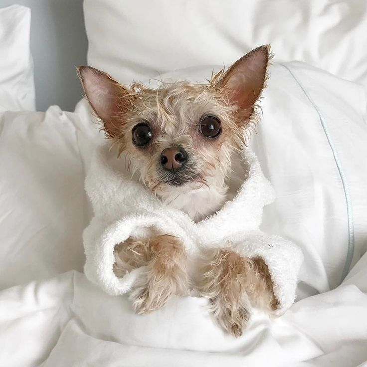 5 Things To Know Before You Take Your Pet On Vacation Pets Your Pet Pet Dogs