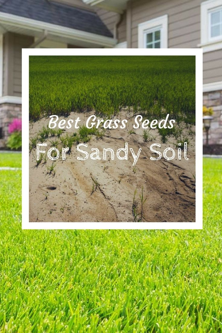 Got sandy soil know the best grass seeds for sandy soil