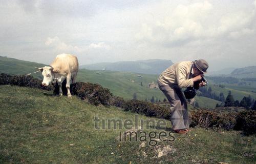 Sommerwiese mit Motiv Fremmer/Timeline Images #1951 #Lechtal #Kuh #Tourist #Tourismus #Fotograf #Berge #Urlaub #Nostalgie