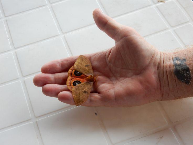 Big moth on Larry's hand