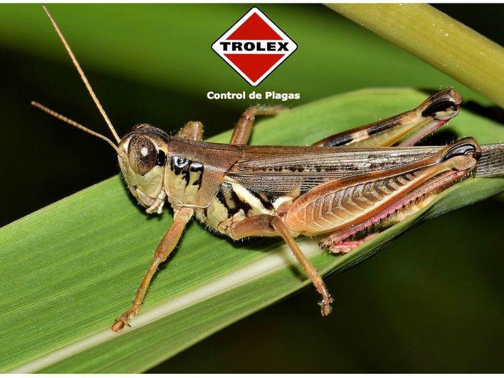 Los insectos siempre están presentes en nuestro huerto. Muchas veces pensamos que todos pueden dañar a nuestras plantas, pero eso no es cierto. Conoce los insectos plaga más comunes en el huerto, sus características y qué puedes hacer para controlarlos.