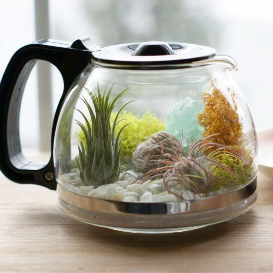 Learn how to make this air plant terrarium and add a little greenery to your afternoon coffee break!