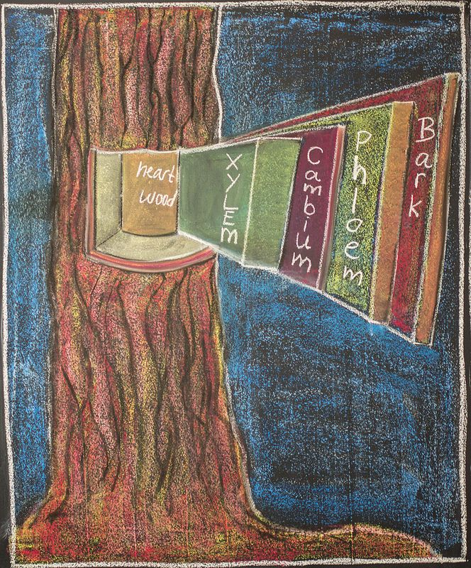 5th Grade, Botany; Layers of a Tree Trunk