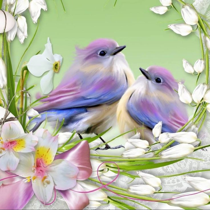 Beautiful Birds Amazing Photos Water Places Color Decoupage Butterflies Acrylics Thank You For
