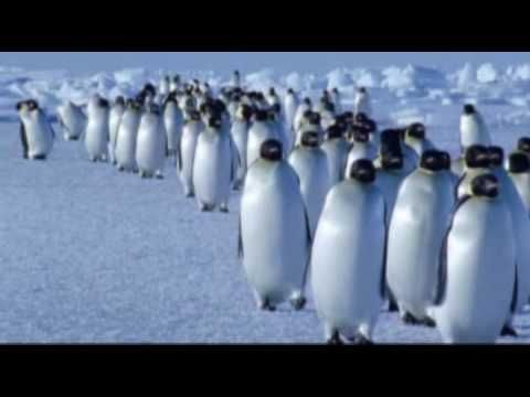 Vangelis - Theme from Antarctica -- out of 40 plus albums by the Master - Vangelis, I have 25. - but missing 4 songs from the complete version of Antarctica RP