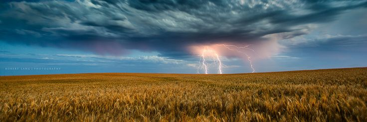 (Buy at Getty Images)  Lightning strikes over wheat crop, South Australia