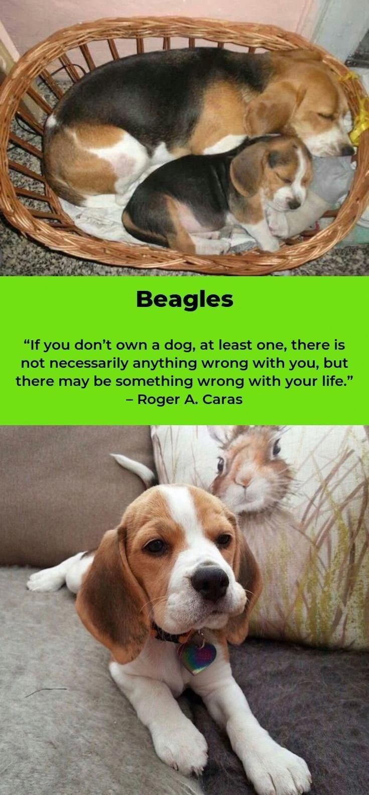 Check Out Our Web Site For Even More Information On Beagles It Is