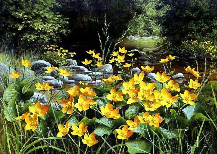 Mary Dipnall — Kingcups by a Woodland Stream (800×569)