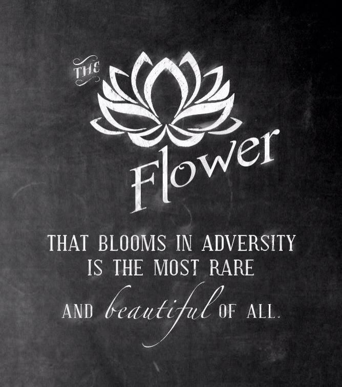 Best 25+ Adversity Quotes Ideas Only On Pinterest