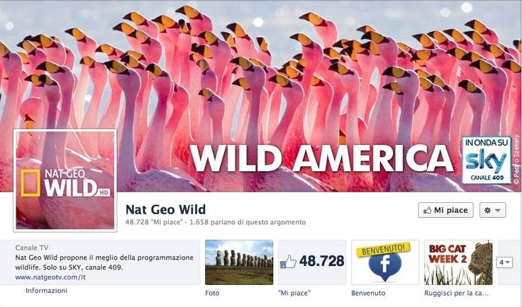Cover photo - Nat Geo Wild Italia