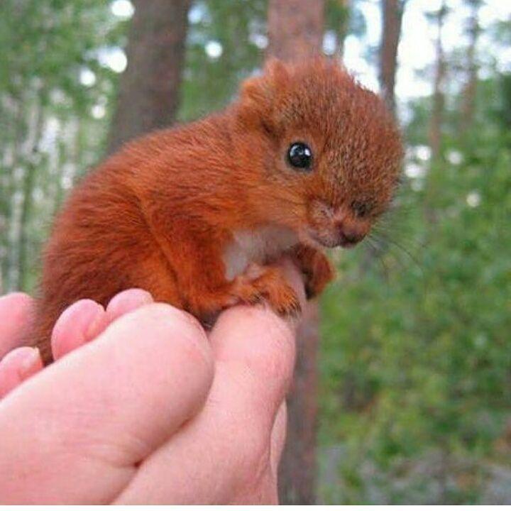 Baby Eichhornchen Cu Susse Tiere Tiere Niedliche Tiere
