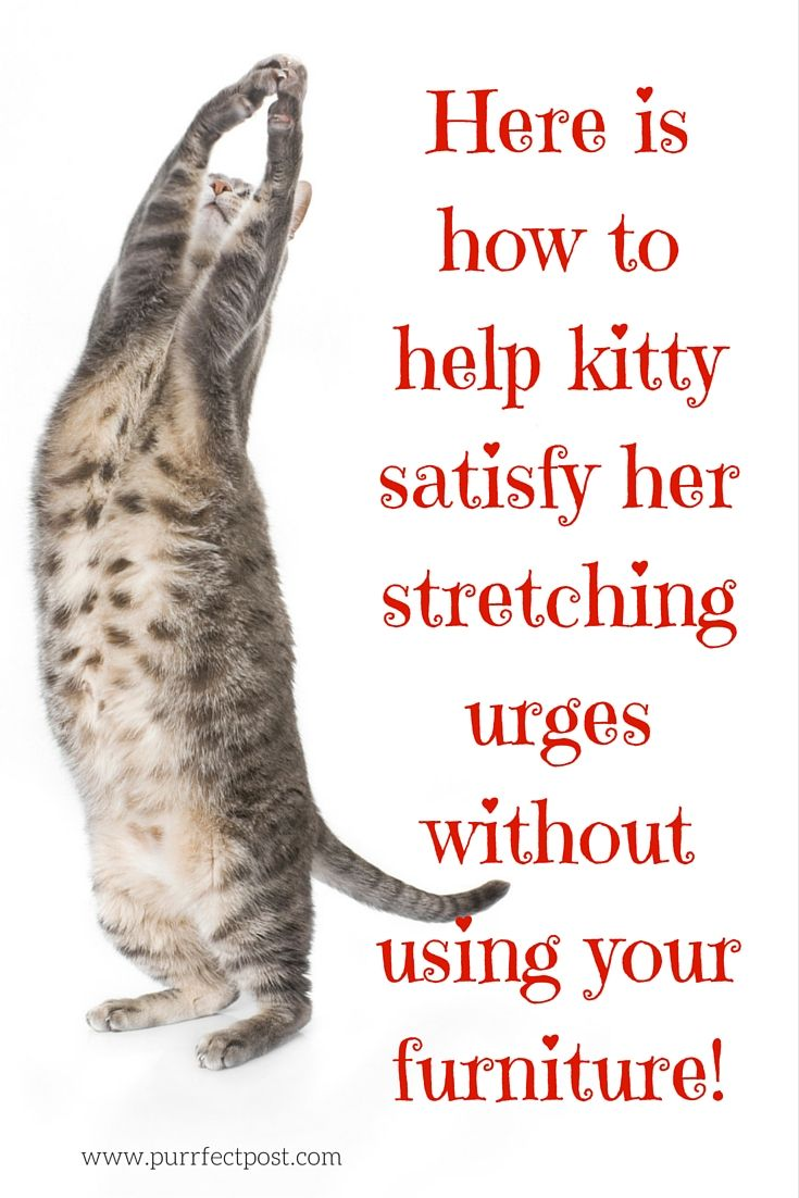 Cats twist, turn, and stretch in so many positions they could be considered masters of yoga.   Keep this idea in mind when choosing a cat scratching post. It should be at least 31 inches tall- that is tall enough to allow your cat to fully extend while scratching. A veterinarian shares her favorite post and how it works to keep cats away from the couch: