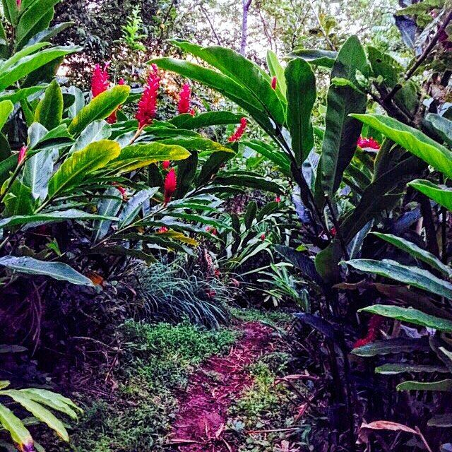 Welcome to the #jungle.  #Hike and #explore #beautiful #Bastimentos #island with us at #BubbasHouse.