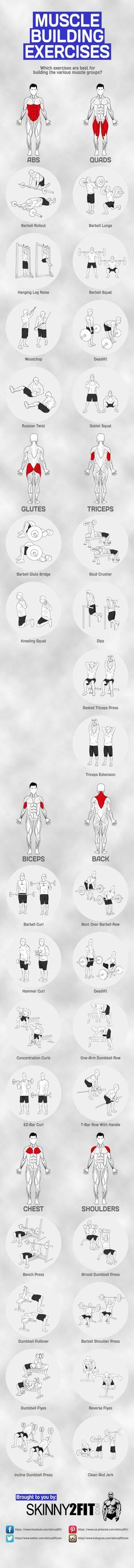 What are the top muscle building exercises for each muscle group? This graphic will show you the best exercises for serious strength and muscle gains.