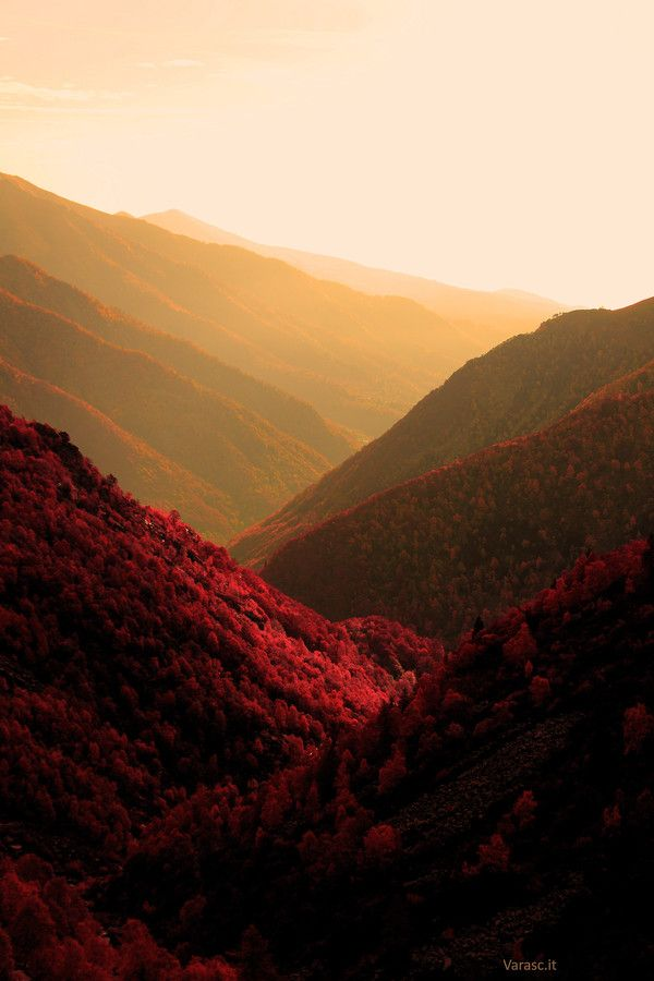 ~~Fall Memories ~ blazing red autumn larches, Italian Alps by Marco Soggetto~~