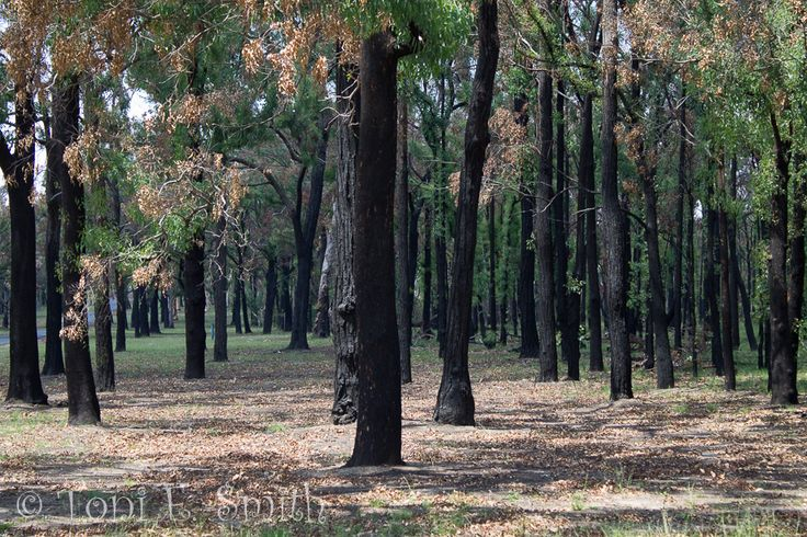 L1M2AP4 Lightroom Editing This is my original image of regrowth after a bushfire. Canon 1100D 1/100 f/5.6 51mm ISO 100 Handheld