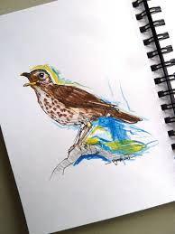 vogels tekenen - Google zoeken