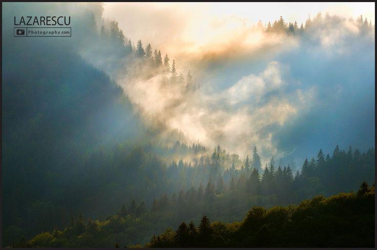Fir forest after rain by Lazarescu R. Catalin on 500px