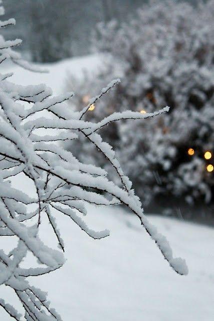 Las flores aparecen en la primavera, la Luna brilla en otoño, hay una brisa fresca en verano, y nieve en invierno. Si tu mente no está ocupada en asuntos triviales, cada momento es un buen momento. ~ Harada Sekkei Roshi