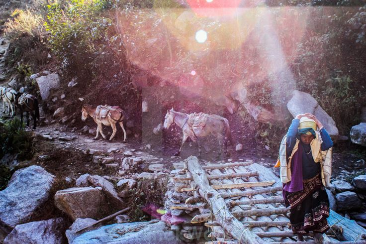The old lady and the donkeys. A photo I took in Nepal, whilst trekking in the Himalayas. #travel #nepal #backpacking #trekking