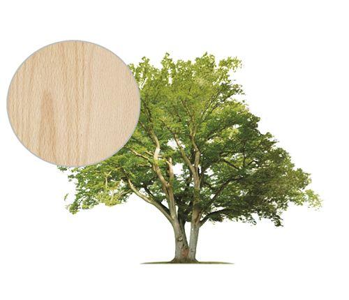 buk_drzewo