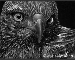 LakeSide Art - Clayboard Scratchboard Hawk. Look at all the detail!