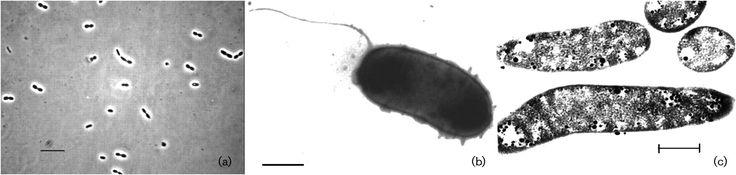 Marichromatium fluminis  [000.005.076]