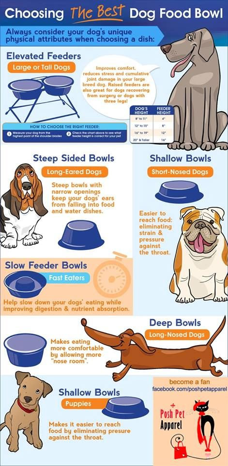 Did you know such a thing existed! Who knew? Now you can pick the right style bowl for your pups