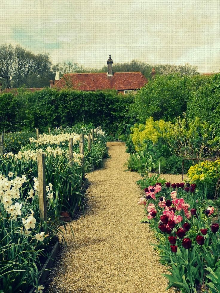41 best cut flower garden images on Pinterest Flower gardening