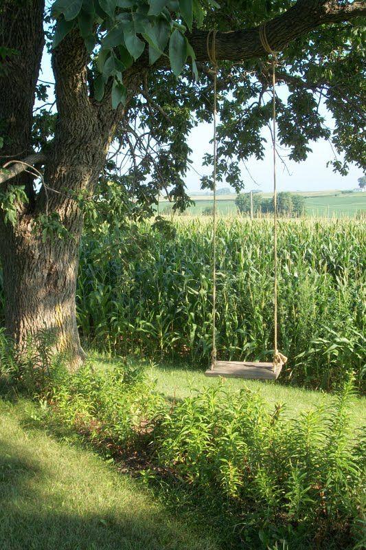 Tree swing and corn fields