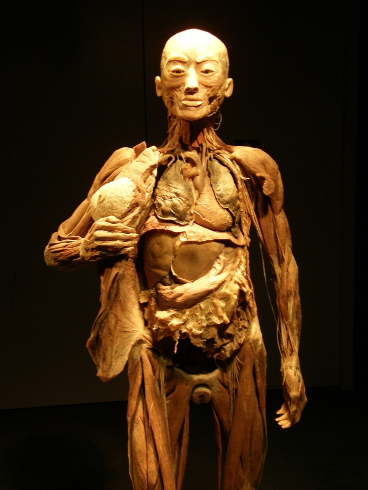 Bodies exhibit. if you haven't seen it, you must ...