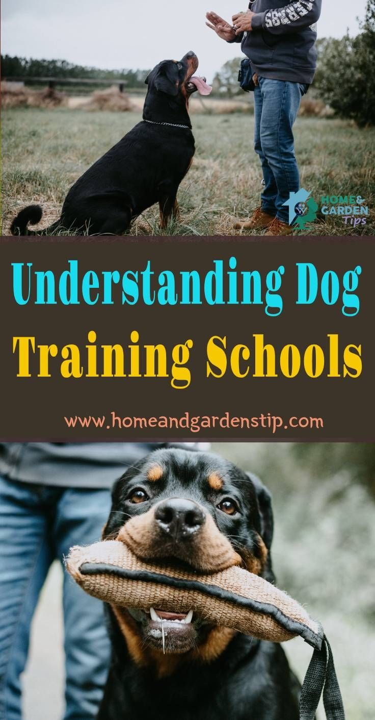 Understanding Dog Training Schools In 2020