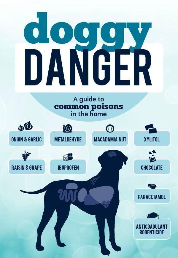 Zahnheilkundebodensee Creature Poisons Danger Common Common