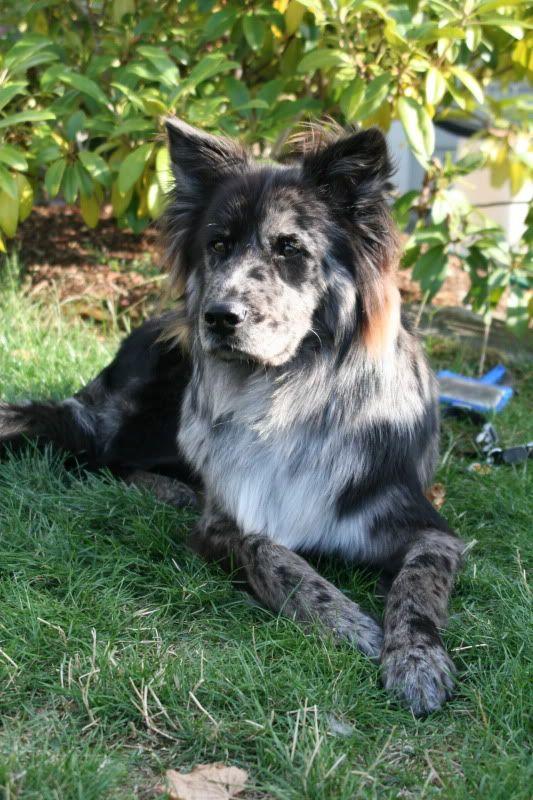 Coolest Dog Breeds