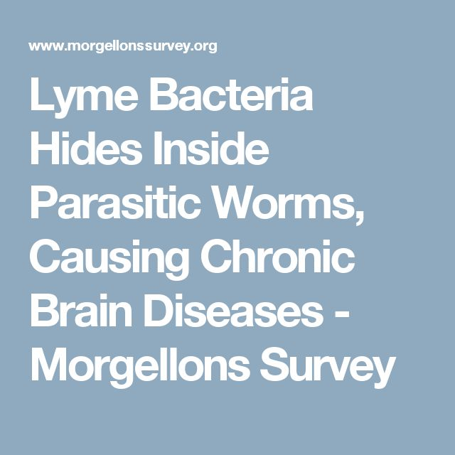 Lyme Bacteria Hides Inside Parasitic Worms, Causing Chronic Brain Diseases - Morgellons Survey