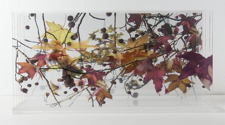 Otoño- fotografía multicapa- Laura Messing