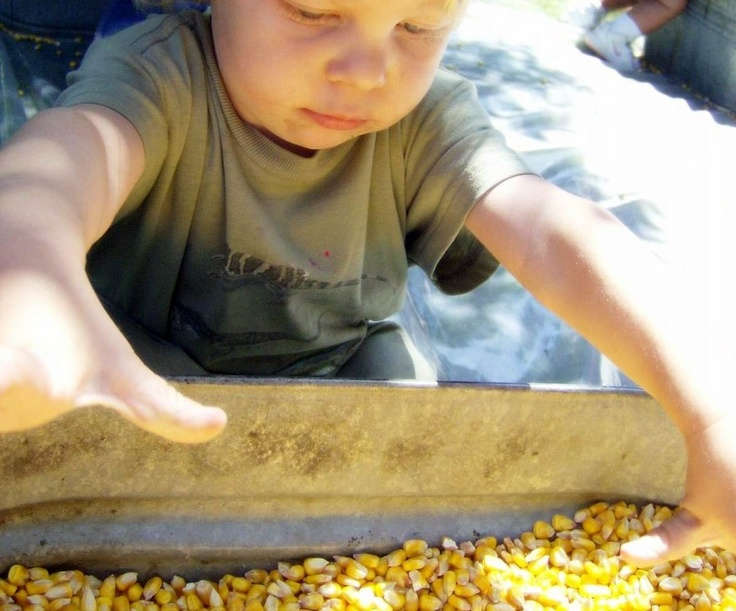 50 things to put in the sensory table