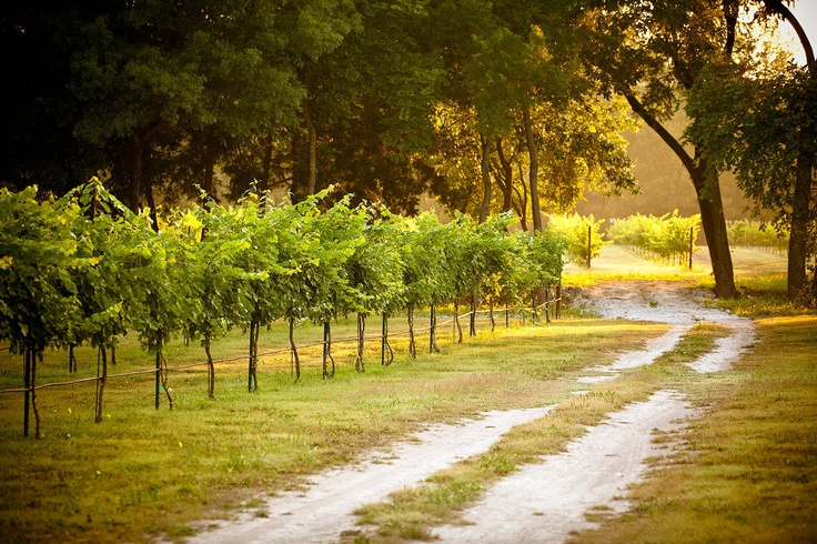 18 best start a vinyard images on pinterest vineyard for Best time to visit wine country